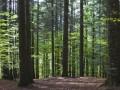 Испанского врача нашли в лесу в Италии спустя 20 лет после исчезновения
