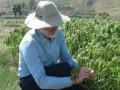 Ученые назвали ключевой элемент перехода людей к земледелию