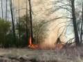 Новый лесной пожар под Киевом: Полиция задержала возможного виновника
