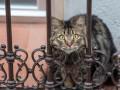 В США выявили первые случаи COVID-19 у котов