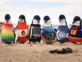 В Австралии 109-летний мужчина вяжет свитера для спасения пингвинов
