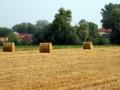 Евросоюз окажет помощь в поддержке украинского села