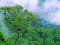 Предприимчивый китаец за продажу свежего воздуха получил 600 тыс долларов