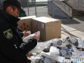 Контрабандисты пытались вывезти респираторы на 1 млн грн