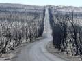 В Австралии лесной пожар охватил площадь более 500 тысяч га