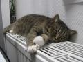 Кличко: В Киеве отопление могут отключить к концу этой недели