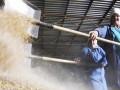 Украина продала за границу 8,6 миллионов тонн зерна