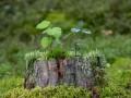 Листья, ветки, лишайники: Что импортирует Украина из Нидерландов