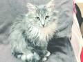 Рекордный полет: кошка выжила после падения с 24-го этажа