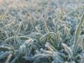 В Киевской области 7 мая ожидаются заморозки