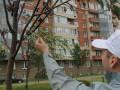 В Петербурге к мертвым деревьям скотчем примотали зеленые ветки