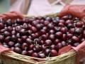 В Минздраве советуют есть шелковицу и черешню каждый день