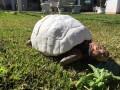 В Бразилии черепахе сделали первый в мире 3D-панцирь