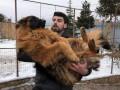 Полиция Киева вернула хозяину украденную овчарку