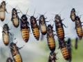 В США автобусный рейс прервали из-за тараканов