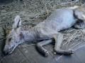 В Полтавской области мужчина убил