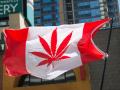 Сенат Канады поддержал легализацию марихуаны