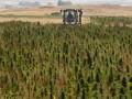 В Крыму были обнаружены 30 тысяч кустов конопли