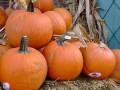 В США грабители похитили с фермы 600 тыкв