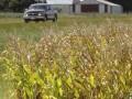 Kernel против Батьківщини. Украинские агрофирмы схлестнулись за кукурузные поля - Ъ