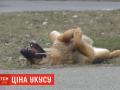 Николаевский горсовет выплатит 60 тыс грн пострадавшей от укуса бездомной собаки