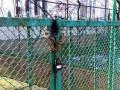 На Закарпатье конфликт с ромами: жители села заварили ворота дома