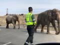 В Испании грузовик со слонами попал в ДТП