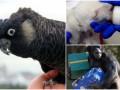 Животные недели: какаду-юбиляр, новорожденный медвежонок и горилла с подарками