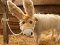Рождественский пес или самая необычная собака-модель