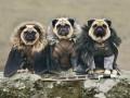 Позитив дня: Парубий в пробке и Игры престолов по-собачьи