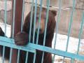 Из частного зоопарка на Донбассе забрали пять медведей