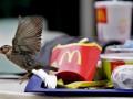 В России мусульманин не смог через суд выяснить состав блюд McDonald's
