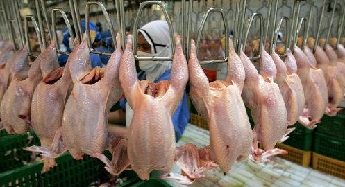 Якутия заменит американскую курятину собственной