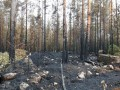 В Финляндии рекордное количество лесных пожаров
