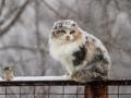 Гололед и снег: синоптики рассказали, с какой погоды начнется неделя в Украине