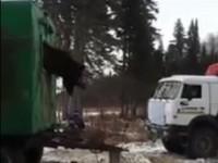 В России застрявшего в окне медведя спасли с помощью КамАЗа