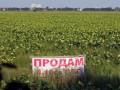 В Кабмине есть 35 сценариев введения рынка земли