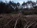 Очевидцы сообщают о вырубке леса под Киевом