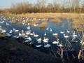 На территории Латвии впервые обнаружили птичий грипп