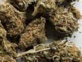 В Чехии разрешили лечебную марихуану