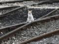 На двух поездах между Украиной и Россией запустят электронную регистрацию