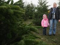 Какой штраф грозит украинцу за срубленную елку