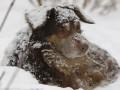Милиция возбудила уголовные дела по фактам убийств 33 собак в Киеве