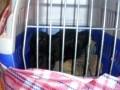 На Луганщине пограничники задержали ВАЗ с обезьянами
