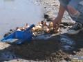 В России активист высадил лук в яму на дороге
