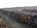 В Керчи уничтожают лес с редкими деревьями