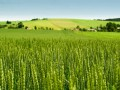Названы главные принципы продажи земельных паев