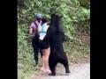 Медведь подкрался к туристам сделать селфи