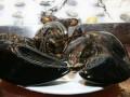 Размер спас омара-ветерана от поедания