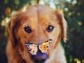 Ах, какие собачки: тинейджер пленила сеть фотоснимками любимчиков